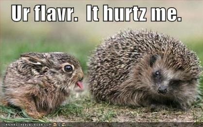 funny-pictures-bunny-porcupine-flavor.jpg